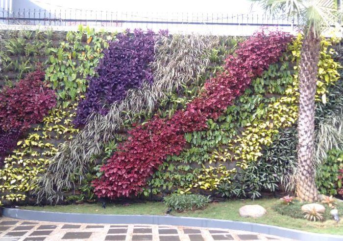 Jasa pembuatan taman vertical (3)