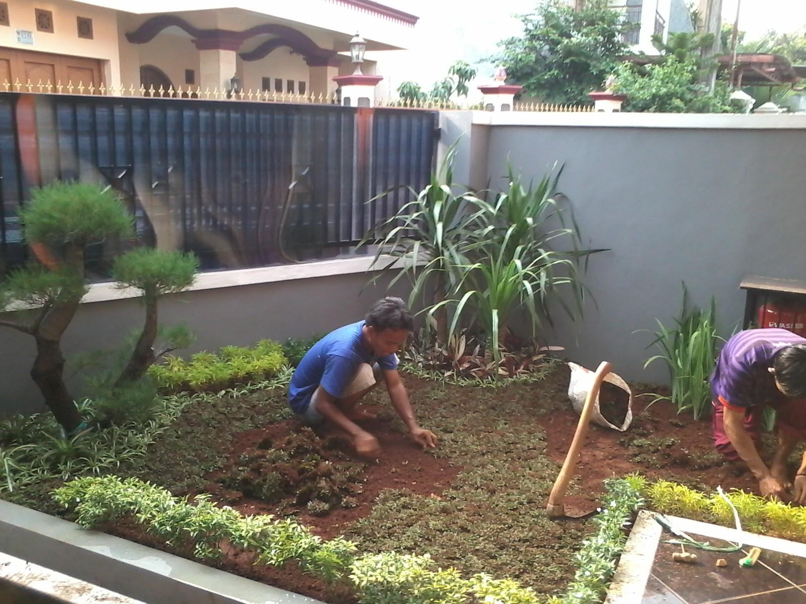 Menata Taman Depan Rumah Sederhana Taman Tanaman